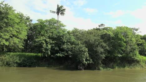 Brazil-Amazon-backwater-near-Santarem-bank-with-lone-palm-s
