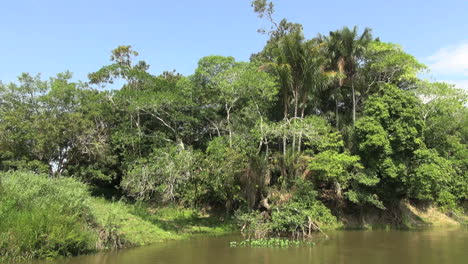 Brazil-Amazon-backwater-near-Santarem-bank-rich-vegetation-s