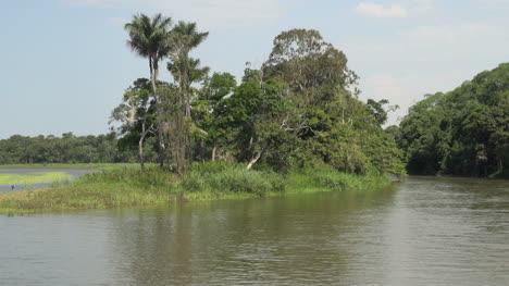 Brazil-Amazon-backwater-bank-bird-flies
