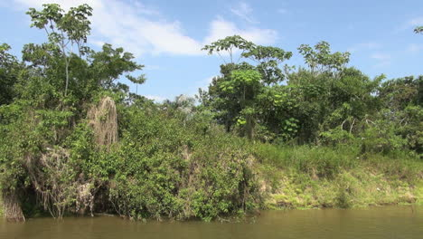 Brazil-Amazon-backwater-trees-and-moss-s