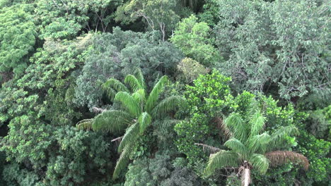 Brazil-Amazon-canopy-and-palms-at-Manaus-s