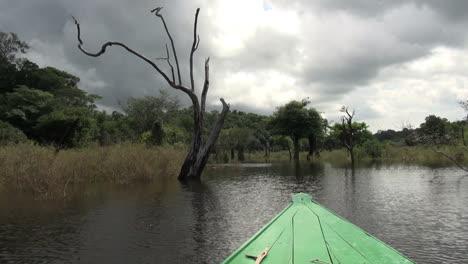 Amazon-dead-trees-dark-cloud-from-boat