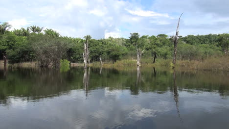 Brazil-Amazon-dead-trees-reflected-clouds-from-boat