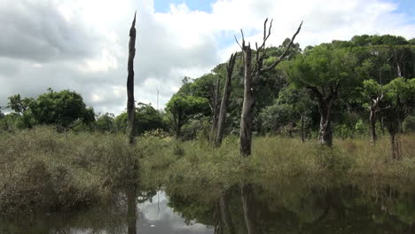 Brazil-Amazon-dead-trees-in-water