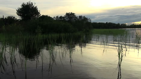 Amazon-grassy-margin-of-lake-at-sunset