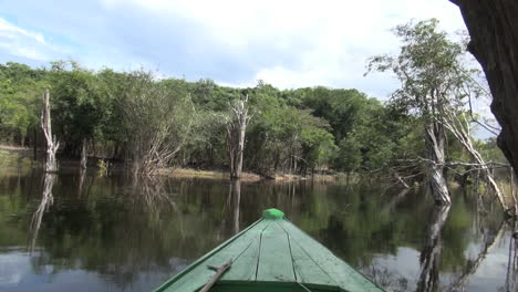 Amazon-dead-trees-and-fish-jump-in-front-of-boat