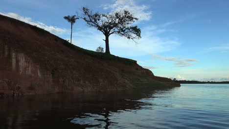 Amazon-two-trees-on-bank-from-boat