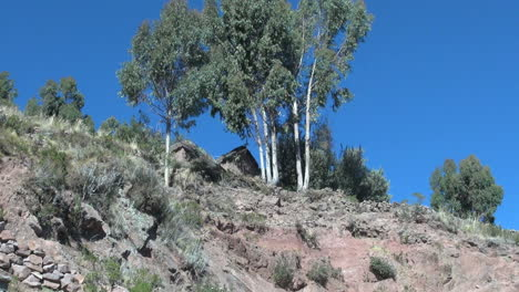 Peru-Taquile-trees-on-steep-hill-and-stone-pile-22