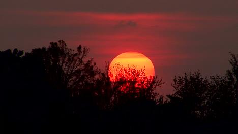 Indiana-Sun-Hundiéndose-Detrás-De-Los-árboles
