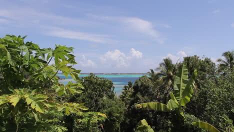 Hojas-Tropicales-De-Bora-Bora-Y-Una-Laguna-Azul