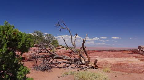 Arizona-Canon-de-Chelly-dead-wood-on-sandstone