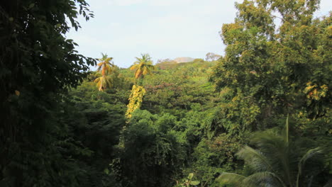 St-Kitts-Rain-Forest-with-sun-on-palm-trees