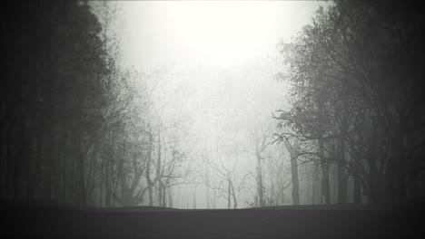 Fondo-Místico-De-Halloween-Con-Bosque-Oscuro-Y-Niebla.