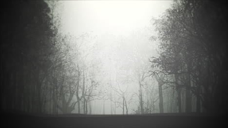 Mystical-halloween-background-with-dark-forest-and-fog-1