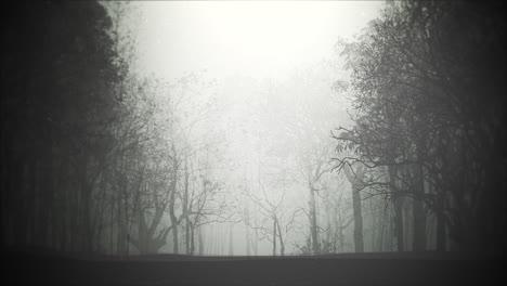 Fondo-Místico-De-Halloween-Con-Bosque-Oscuro-Y-Niebla-1