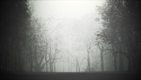 Mystical-halloween-background-with-dark-forest-and-fog-2