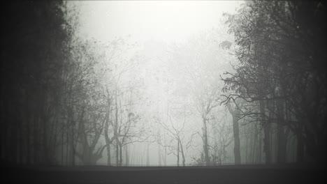 Fondo-Místico-De-Halloween-Con-Bosque-Oscuro-Y-Niebla-2