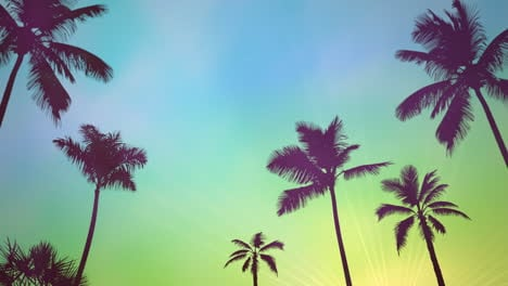Panoramic-view-of-tropical-landscape-with-palm-trees-and-sunset-3