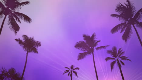 Panoramic-view-of-tropical-landscape-with-palm-trees-and-sunset-5