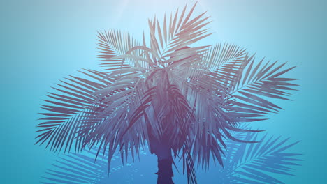 Closeup-tropical-palm-trees-with-summer-background