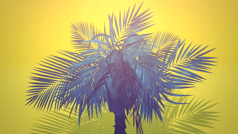 Closeup-tropical-palm-trees-with-summer-background-1