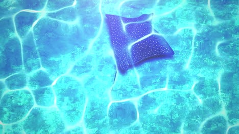 Closeup-stingray-in-underwater-world-with-summer-background-2