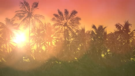 Panoramic-view-of-tropical-landscape-with-palm-trees-and-sunset-11