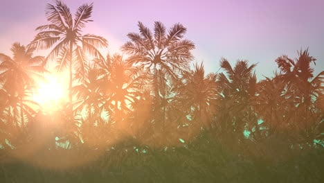 Panoramic-view-of-tropical-landscape-with-palm-trees-and-sunset-12