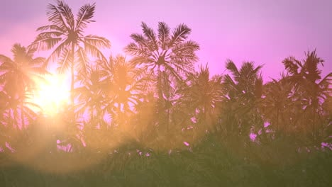Panoramic-view-of-tropical-landscape-with-palm-trees-and-sunset-14