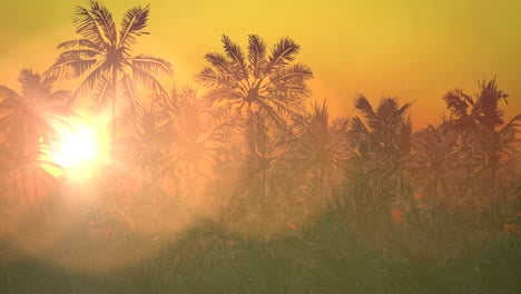 Panoramic-view-of-tropical-landscape-with-palm-trees-and-sunset-15