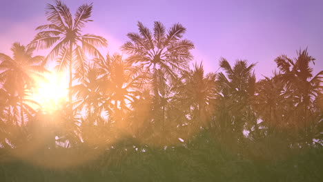 Panoramic-view-of-tropical-landscape-with-palm-trees-and-sunset-16