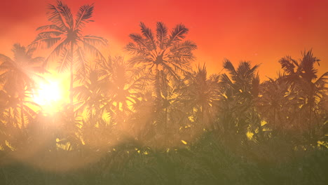 Panoramic-view-of-tropical-landscape-with-palm-trees-and-sunset-17