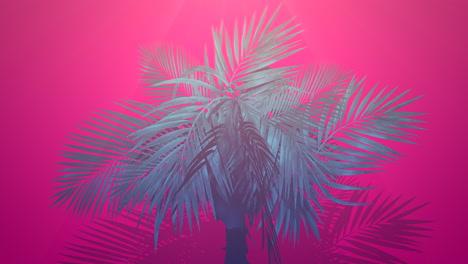 Closeup-tropical-palm-trees