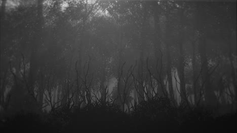Mystical-halloween-background-with-dark-forest-and-fog-5
