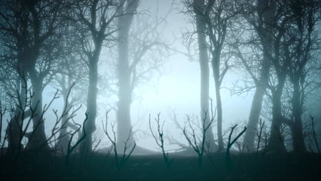 Mystical-halloween-background-with-dark-forest-and-fog-7