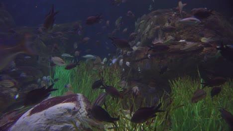 Beautiful-underwater-scenes-around-a-coral-reef