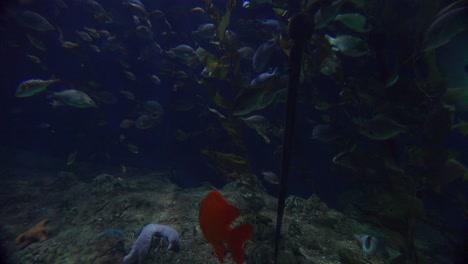 Beautiful-underwater-scenes-around-a-coral-reef-1