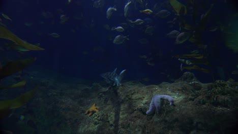 A-shark-patrols-a-coral-reef