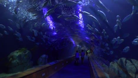 People-walk-through-an-underwater-tunnel-in-an-aquarium-display-1