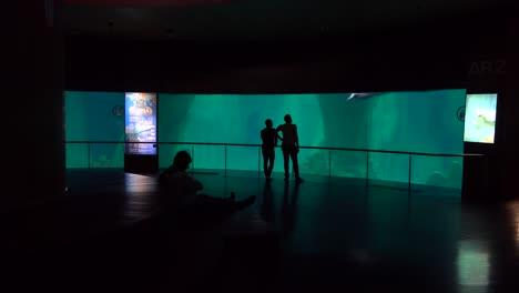Zuschauer-Beobachten-In-Einem-Freizeitpark-Einen-Wal-Der-In-Einem-Panzer-Schwimmt