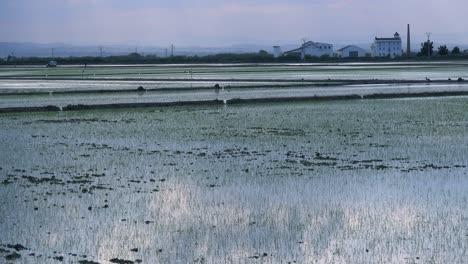 Beautiful-light-reflects-of-rice-fields-and-paddies-near-Albufera-Spain