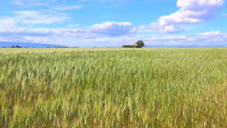 Beautiful-vast-open-fields-of-waving-grain-2