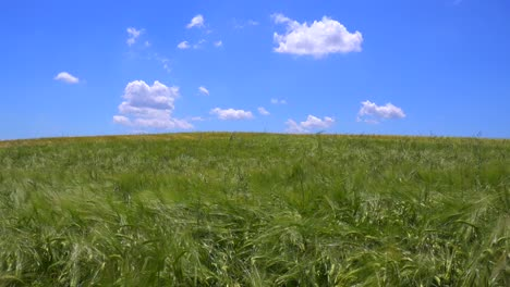 Clouds-drift-behind-beautiful-vast-open-fields-of-waving-grain