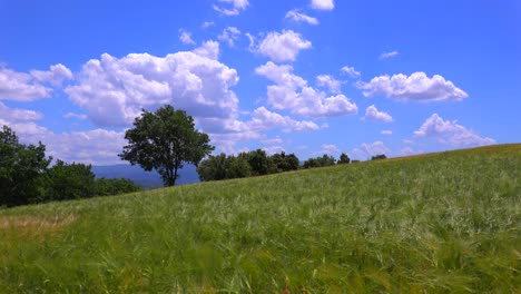 Clouds-drift-behind-beautiful-vast-open-fields-of-waving-grain-in-Provence-France