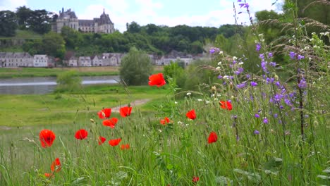 Red-wildflowers-bloom-in-front-of-a-beautiful-chateau-stands-along-the-Loire-Río-in-France