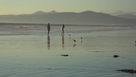 Shorebirds-pick-through-the-sand-along-California-s-central-coast-with-people-running-in-distance