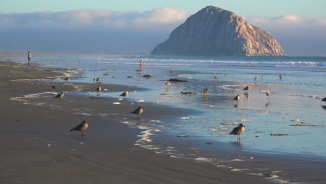 Shorebirds-and-people-in-front-of-the-beautiful-Morro-Bay-rock-along-California-s-central-coast