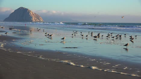 Shorebirds-and-people-in-front-of-the-beautiful-Morro-Bay-rock-along-California-s-central-coast-1
