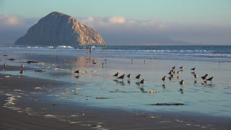 Shorebirds-and-people-in-front-of-the-beautiful-Morro-Bay-rock-along-California-s-central-coast-2