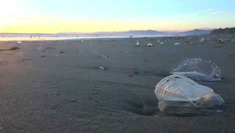 Algas-Y-Criaturas-Costeras-A-Lo-Largo-De-Una-Playa-De-California-1